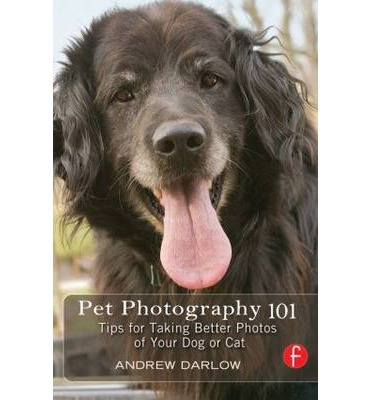 Pet Photography 101 : Tips for Taking Better Photos of Your Dog or Cat