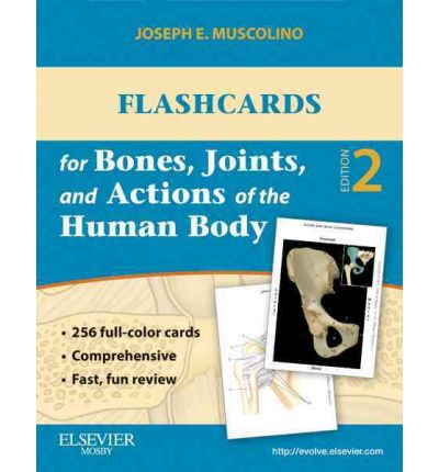 Musculoskeletal Anatomy Coloring Book By Joseph E Muscolino : Functional anatomy flash cards: bones joints and muscles : pdf