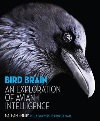 Bird Brain : An Exploration of Avian Intelligence