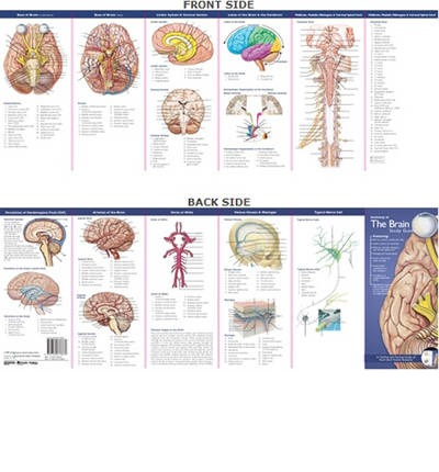 Anatomical Chart Company's Illustrated Pocket Anatomy: Anatomy of the Brain Study Guide
