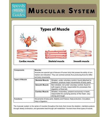 Muscular System Speedy Study Guide Speedy Publishing