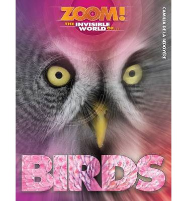 Zoom! The Invisible World of Birds