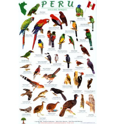 Peru Forest Bird Guide