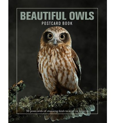 Beautiful Owls Postcard Book